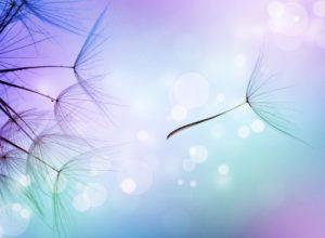 Beautiful Abstract flying Dandelion seeds